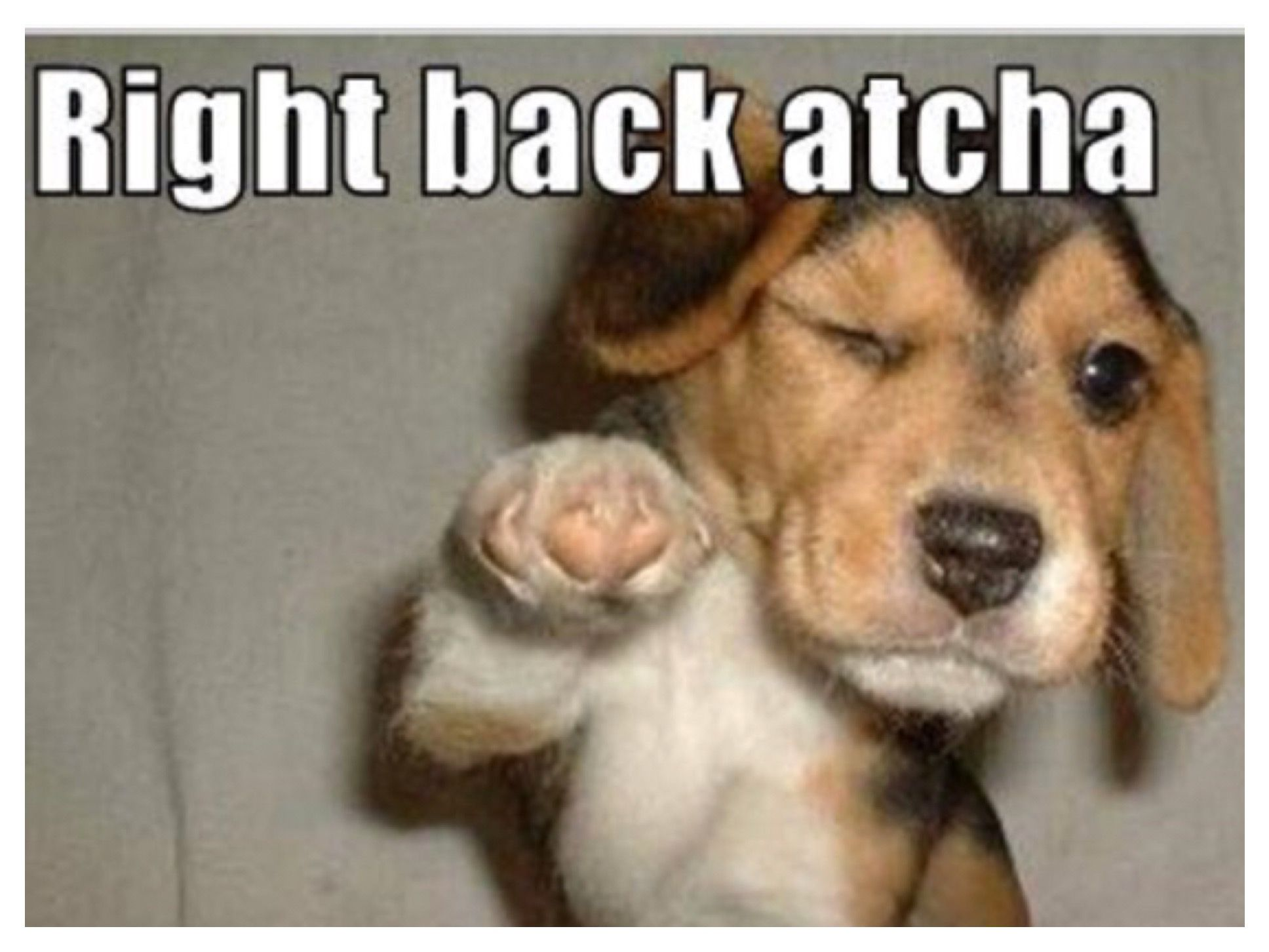 Pin By Margaret O Neill On Animals Funny Dog Memes Cheer Up Funny Dog Memes