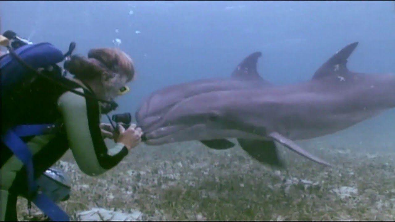 Dolphin sounds [ASMR] / Relaxation Music / Binaural Beats ...