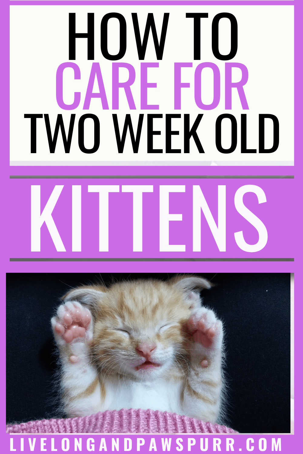 Everything You Need To Know About 2 Week Old Kittens In 2020 Cool Cat Trees Kittens Pet Mom