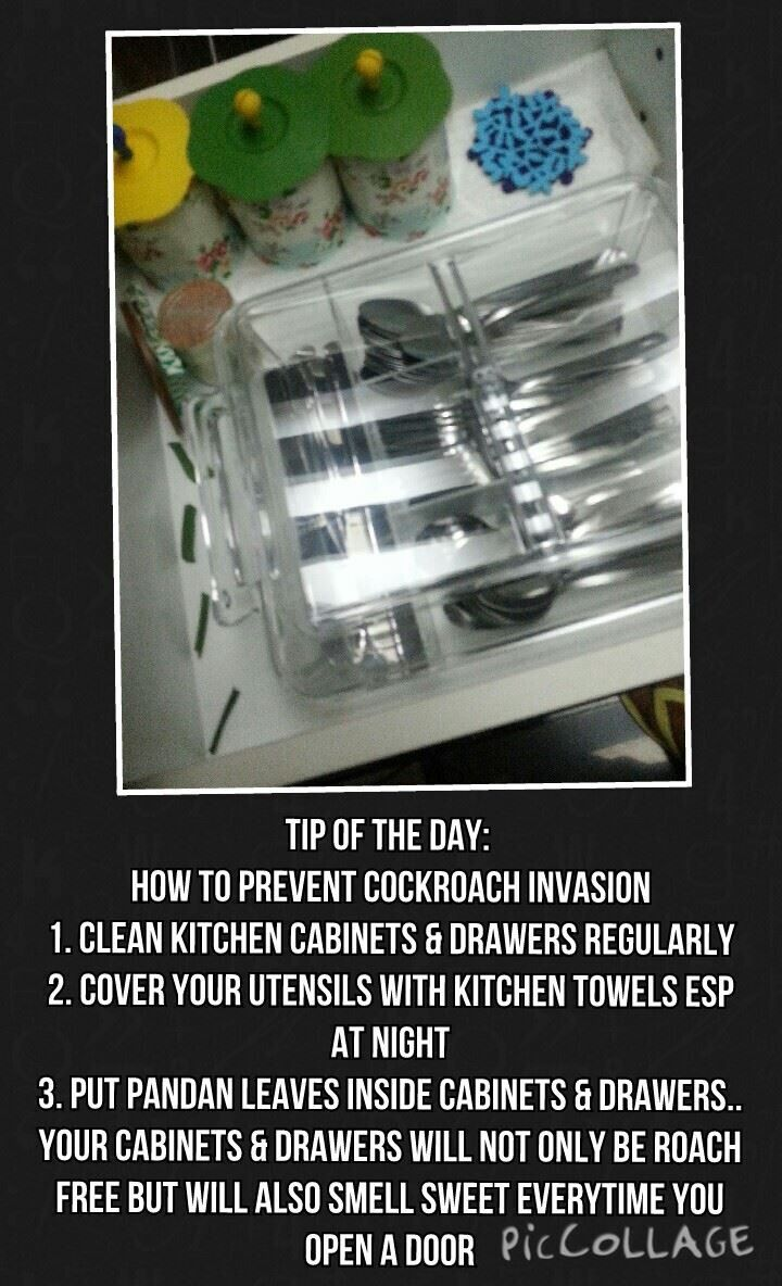 How to keep cockroaches away from kitchen cabinets ...