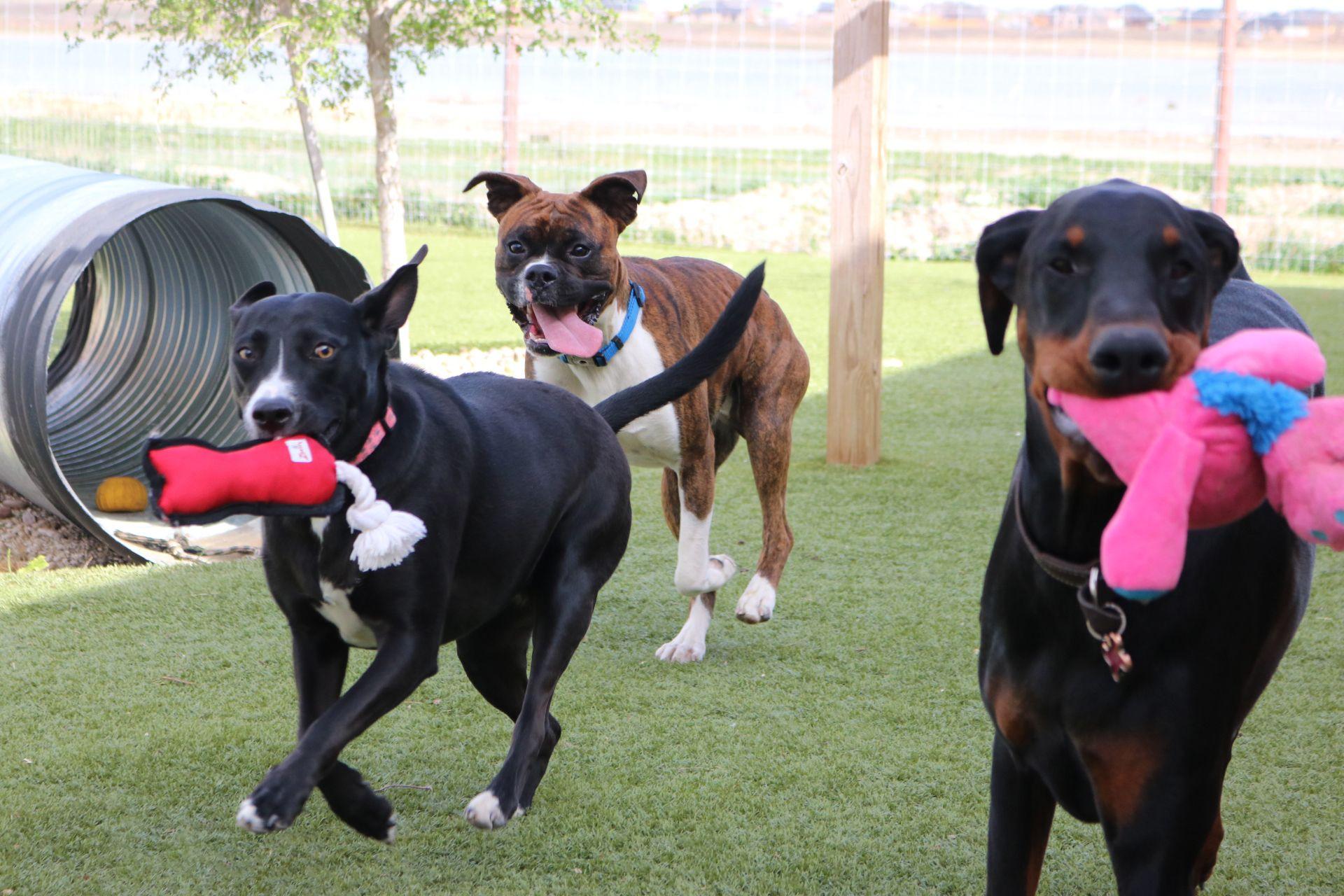 Le Chateau Pet Resort Featured Project Pet Resort Pet Boarding