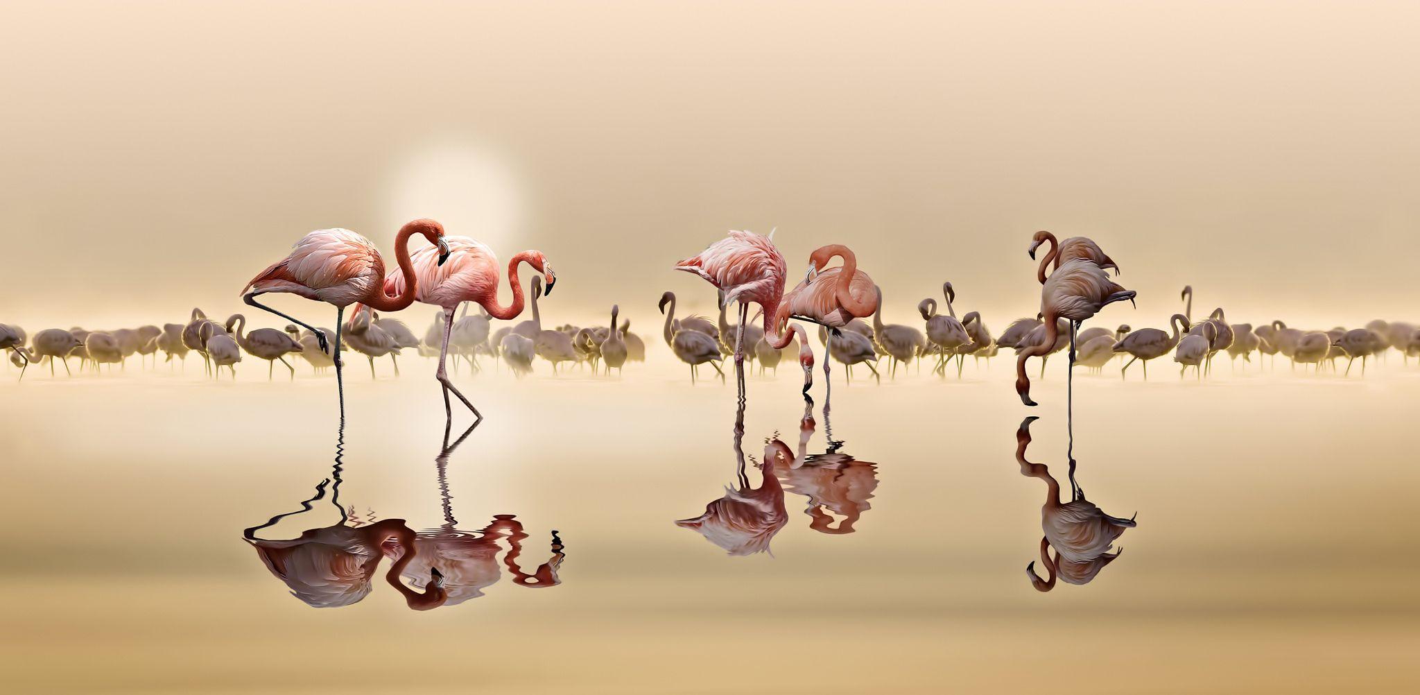 Flamingos - Flamingos as fine art