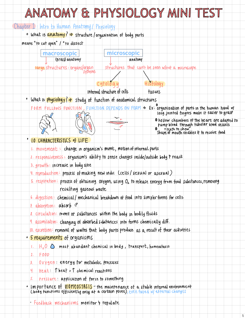 Increíble Anatomy And Physiology Chapter 16 Test Ilustración ...