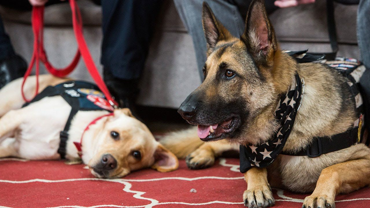 Meet the 2015 Hero Dogs Part 1 Dogs, Service dogs, Hero