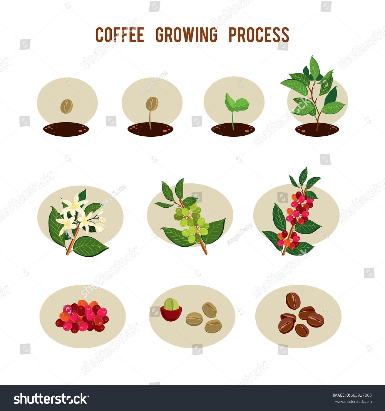 Plant seed germination stages. Process of planting and