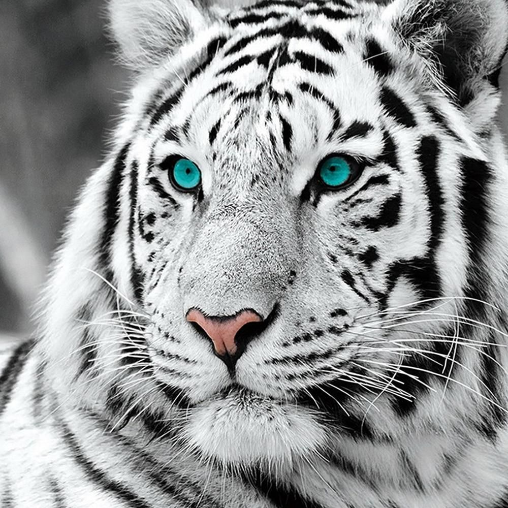 Diy 5d Full Diamond Painting Cross Stitch Painting White Tiger