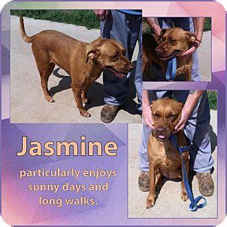 Altus Ok Terrier Unknown Type Small Golden Retriever Mix Meet Jasmine A Dog For Adoption Kitten Adoption Pets Adoption