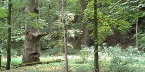 Fictional Forests: Why They Enchant Us