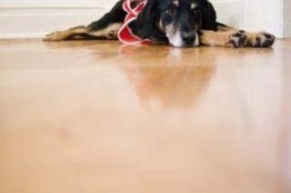 How To Clean The Carpet After Parvo Carpet Cleaning Pet Stains Natural Carpet Cleaning How To Clean Carpet