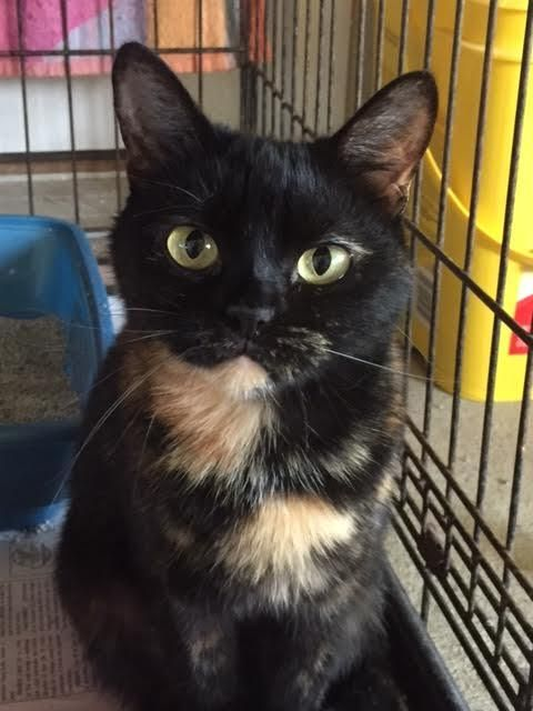 Adopt Buck On With Images Cat Adoption Humane Society Adoption