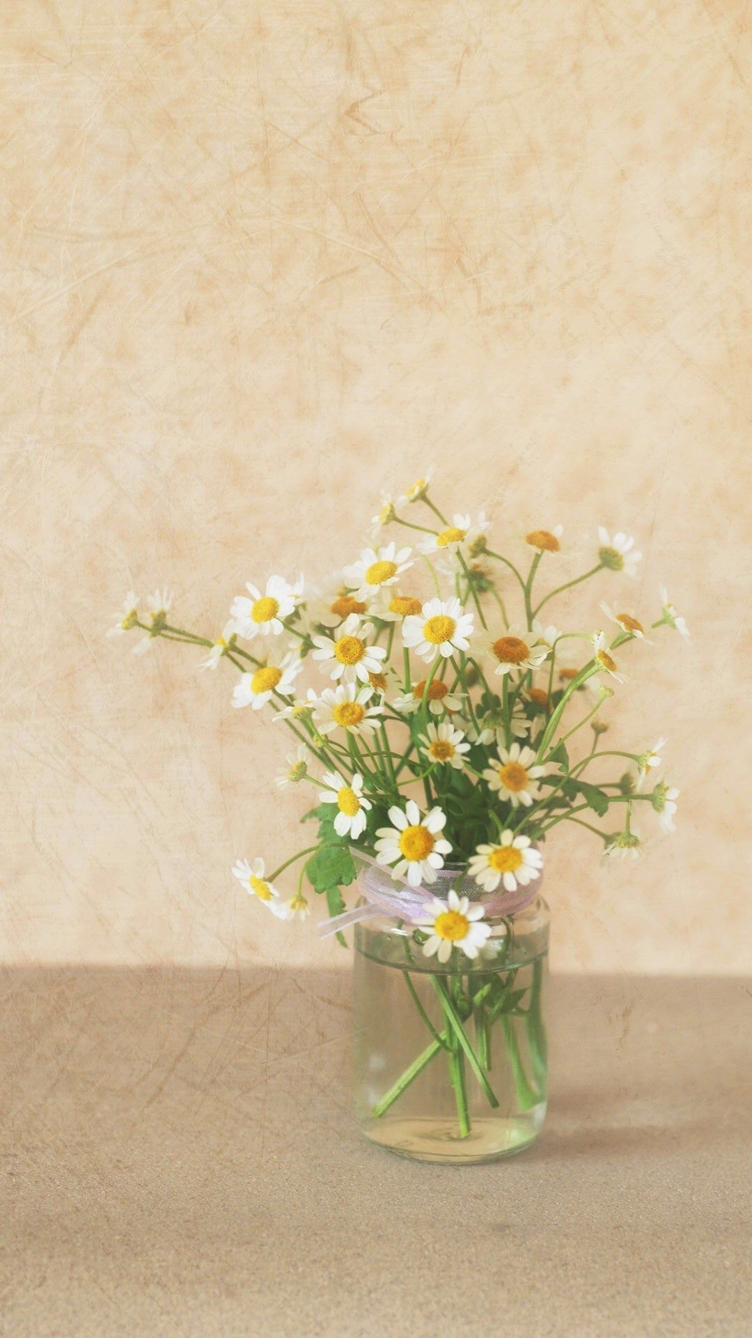 Pure Simple Daisy Flower Water Glass Vase iPhone 6