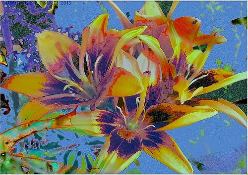 lilies revisited