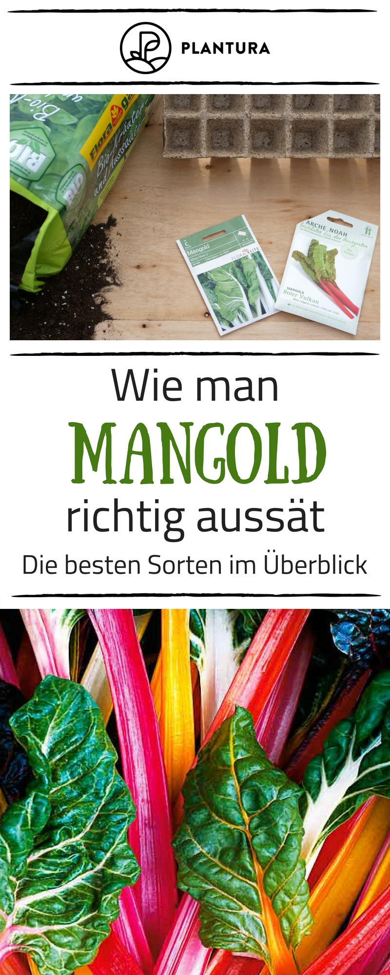 Mangold Anbauen Aussaat Pflege Und Erntezeit Sorten Vielfalt Im