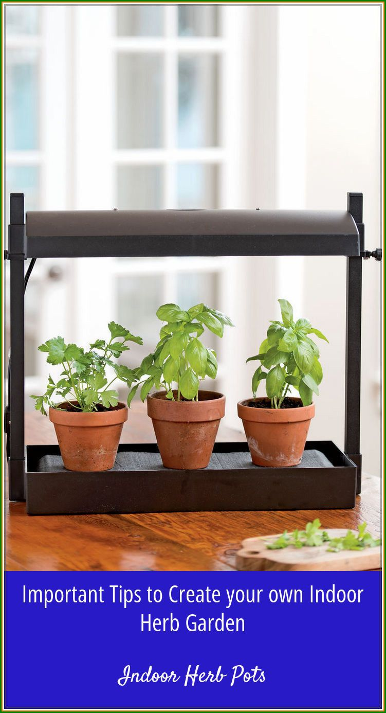 No Need To Buy Herbs Grow Indoor Herb Pots At Your Home Now