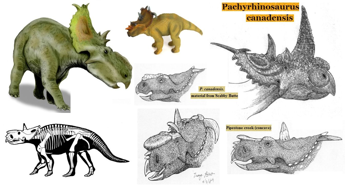 Royalty-Free (RF) Clipart of Ceratopsid Dinosaurs ...