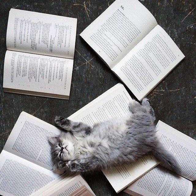 Você é louco por ter lido o que mais ninguém leu nesse livro?
