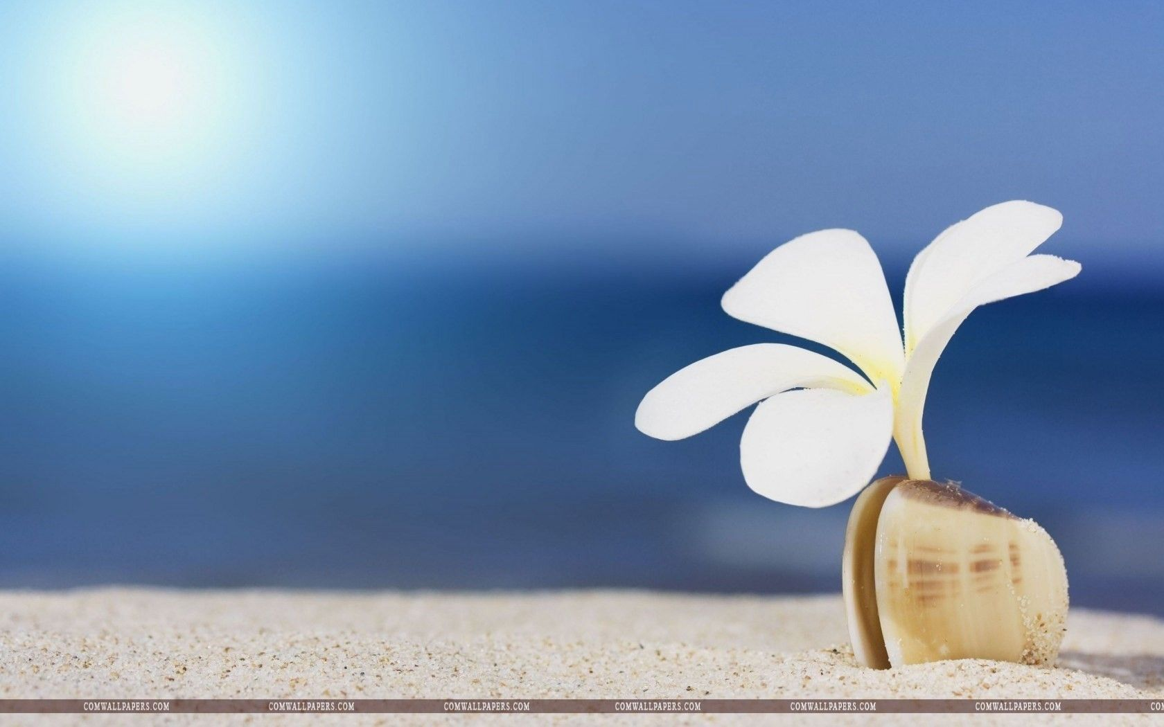 flower white shell sand beach wallpaper flowers hd wallpapers rh pinterest com