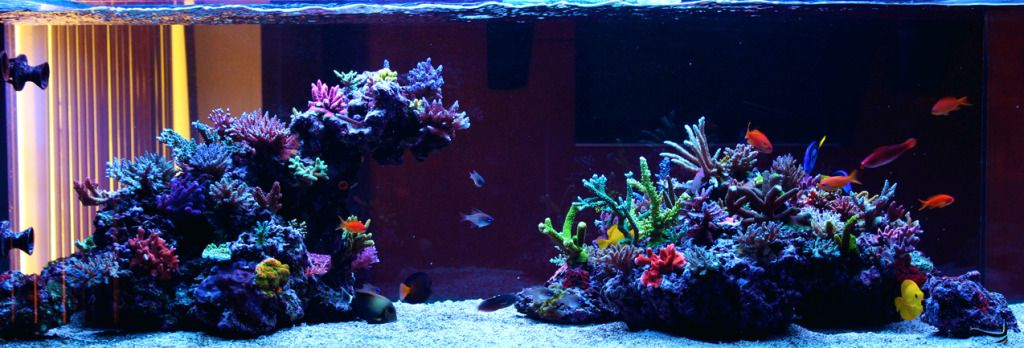 250g Sps Peninsula Style Tank Page 5 Reef Central Online