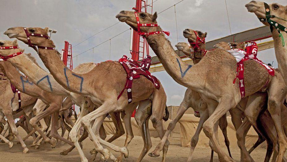 #documentary #Wild #Arabia - #Sand, #wind and #stars