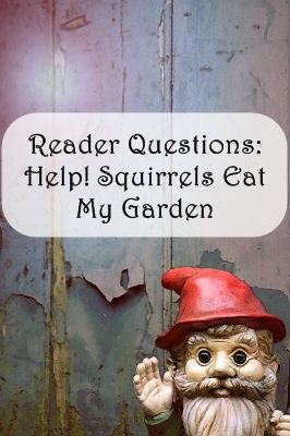 Reader Questions How Do I Keep The Squirrels From Eating My Garden Advice On Making Your
