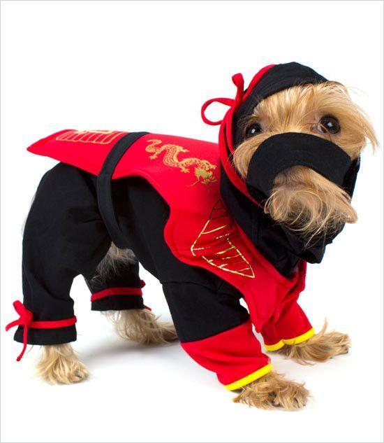 Dragon Ninja Dog Costume Dog Costume Dog Halloween Costumes