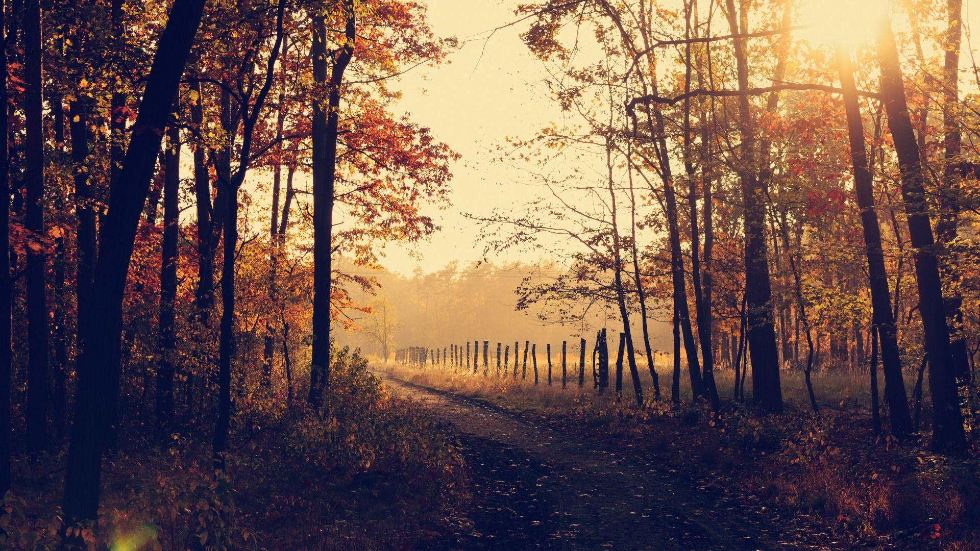Обои forest, autumn, leaves, tree. Природа foto 10