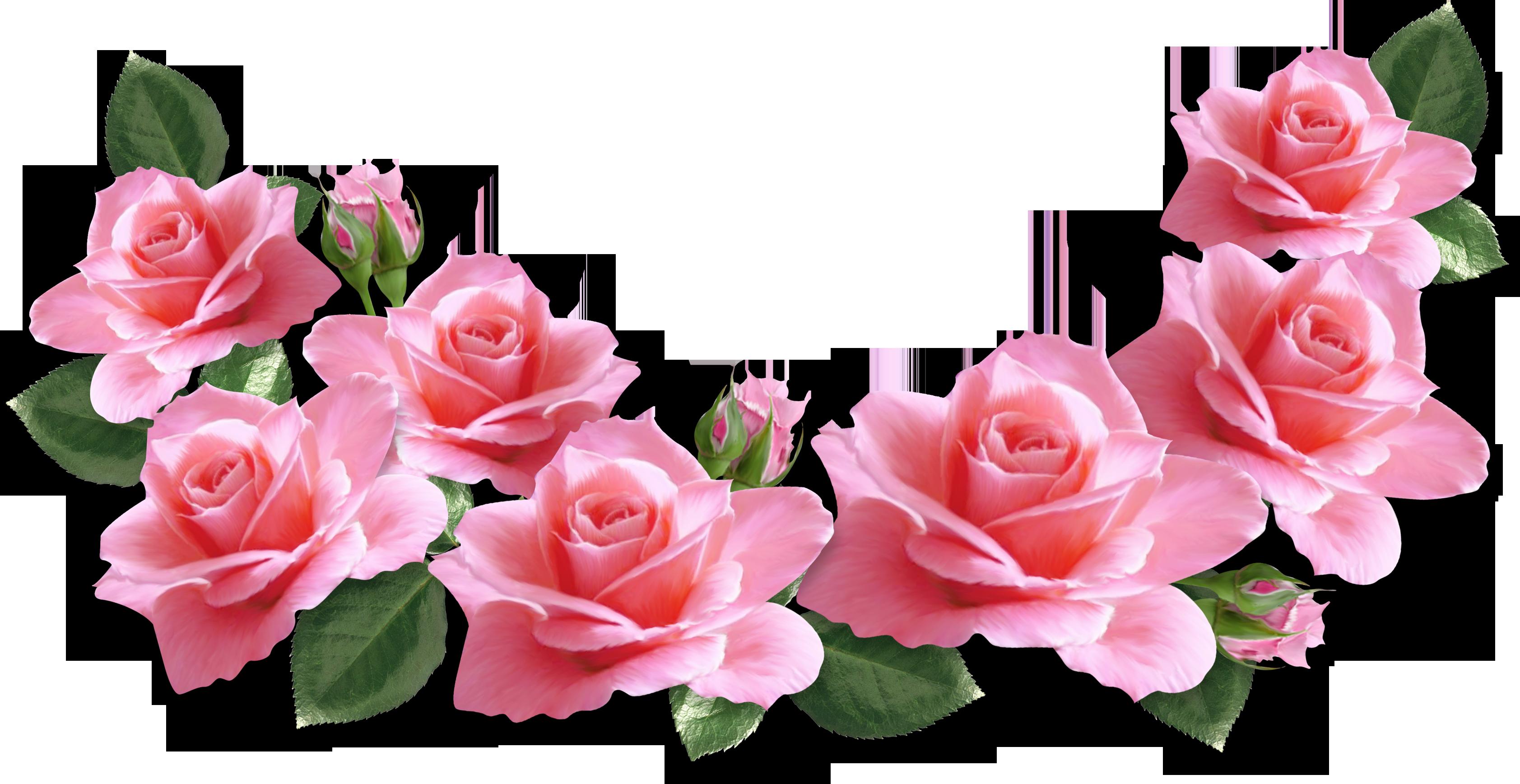 tren 11 bunga vintage png gambar bunga tren 11 bunga vintage png gambar bunga