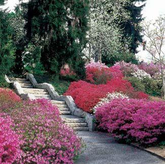 Craigslist U S Cities Asheville Nc Biltmore Estate Asheville North Carolina City Country Cas Biltmore Estate Azaleas Garden Biltmore House