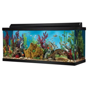 75 Gallon Fish Tank Clear For Life