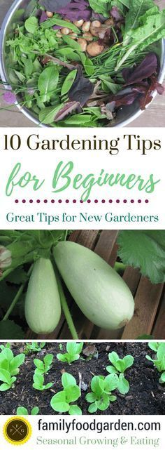 #gardening #beginnergardening 10 Beginner gardening tips. Beginners may wish to grow everything in sight and start with a large garden, but one of the best things you can dowhen you start growing food is totake it slowly. Having a garden you can't keep up with may lead you to dislike gardening instead of enjoying it. Beginner gardening tips, beginner gardening vegetables, beginner gardening flowers, beginner gardening layout, beginner gardening easy, beginner gardening how to grow.