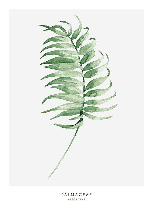 Fin Botanisk Plakat Med En Illustrasjon Palmeblader Botaniske Plakater Malekunst