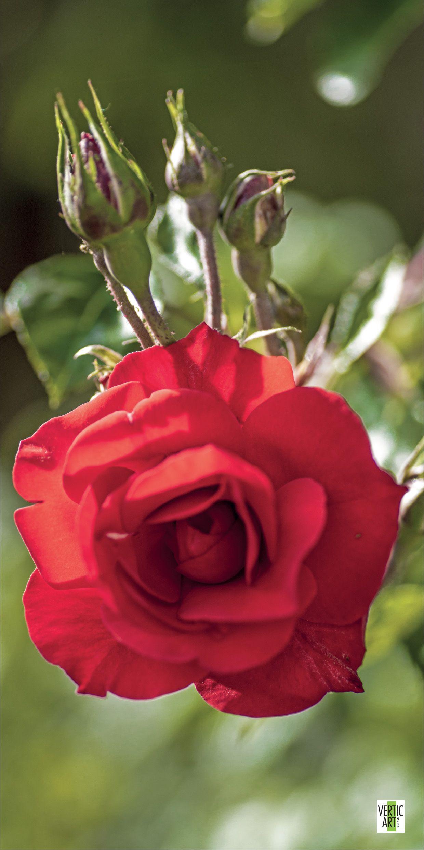 Épinglé sur Fleur