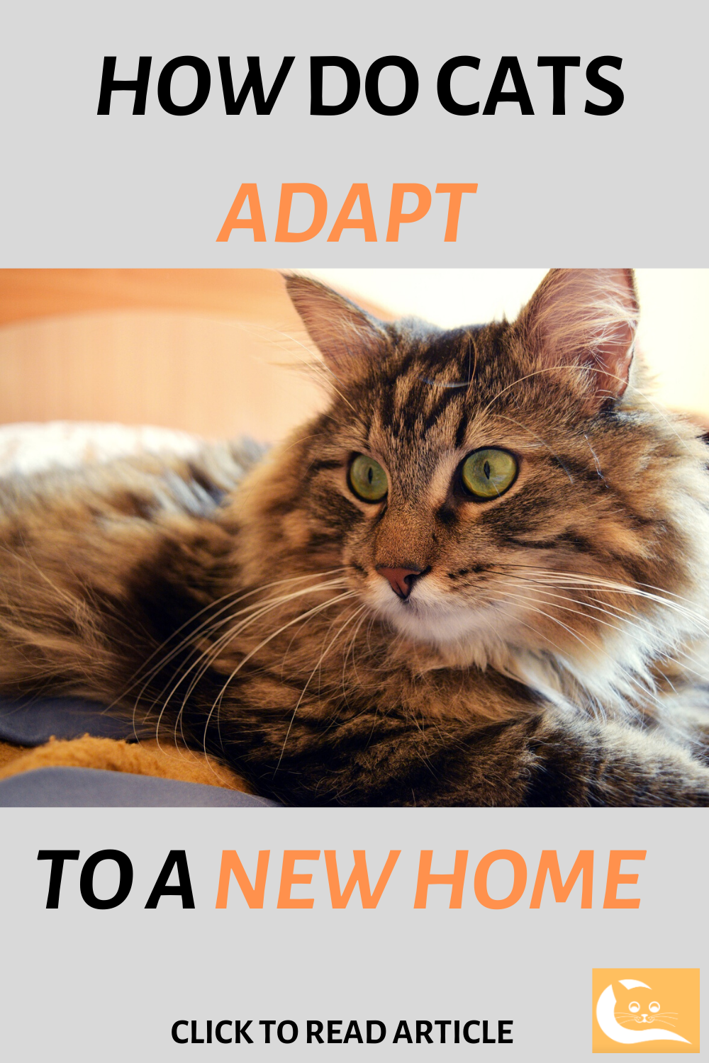 How Do Cats Adapt To A New Home Cat Facts Cat Care Adaptations