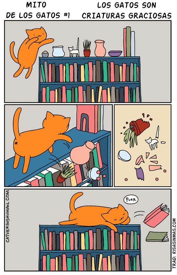 Mito de los gatos 1