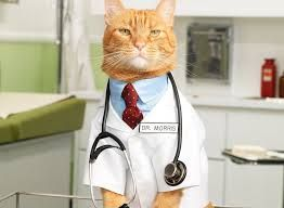 "DoctorMeow is paging software that is ideal for offices where staff provide services in multiple rooms concurrently.    Say we work at a medical office, and I am the intake person.  After letting a patient fill required forms, I click the ""Page"" button for a nurse to let them know that we ..."