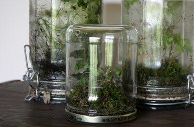 Um modelo diferente de terrário  matéria completa em http://www.5orangepotatoes.com/blog/2011/07/03/easy-upside-down-glass-jar-terrarium/