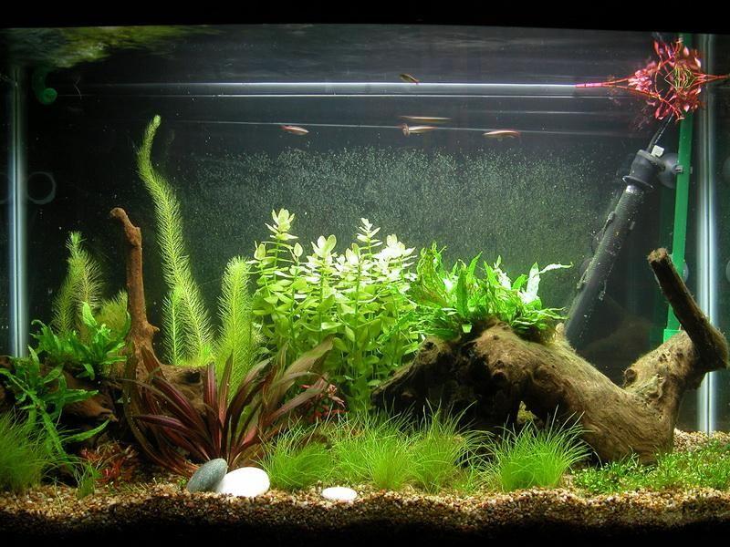 Bogwood Fish Tank Decoration Ideas | Aquascapes | Pinterest | Room