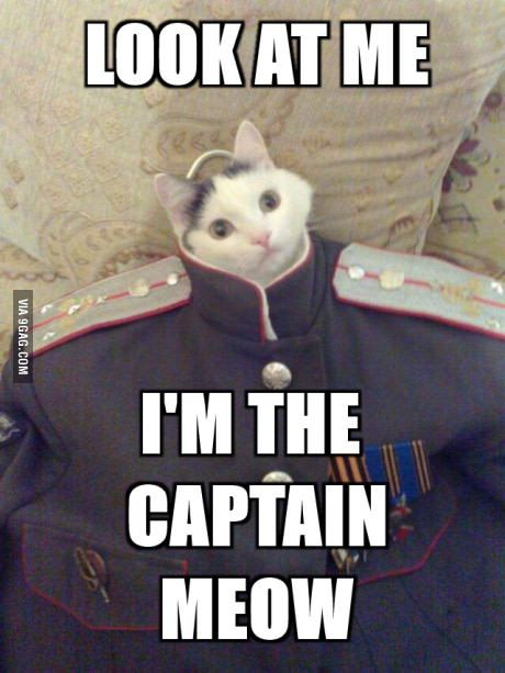Look at me! | Funny cat memes, Funny animal pictures ...