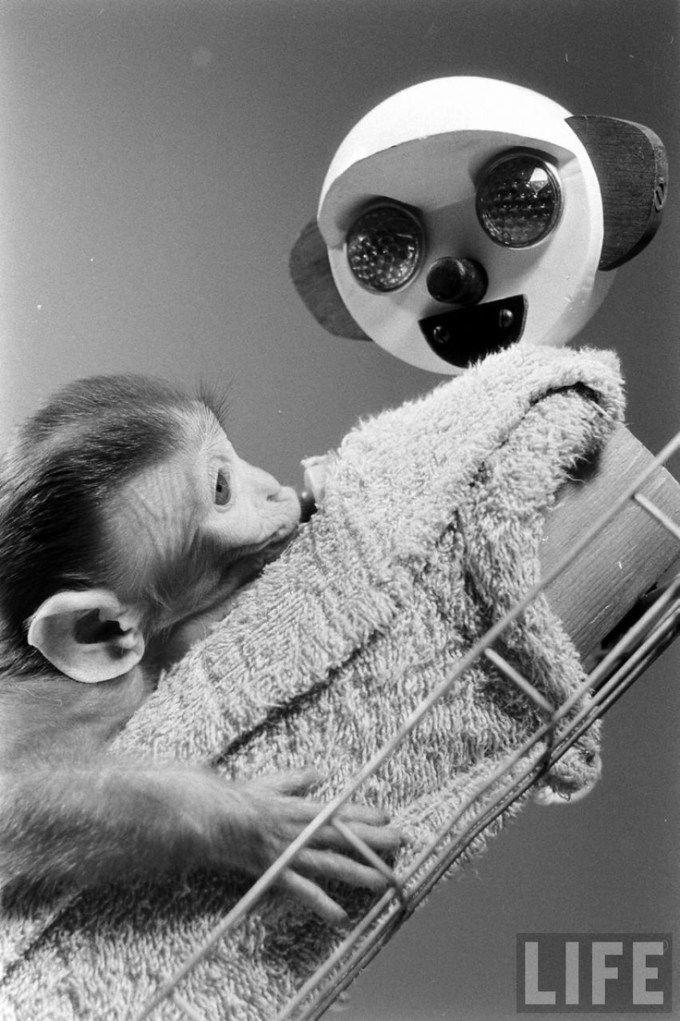 resignation letter word document%0A harlow s monkeys