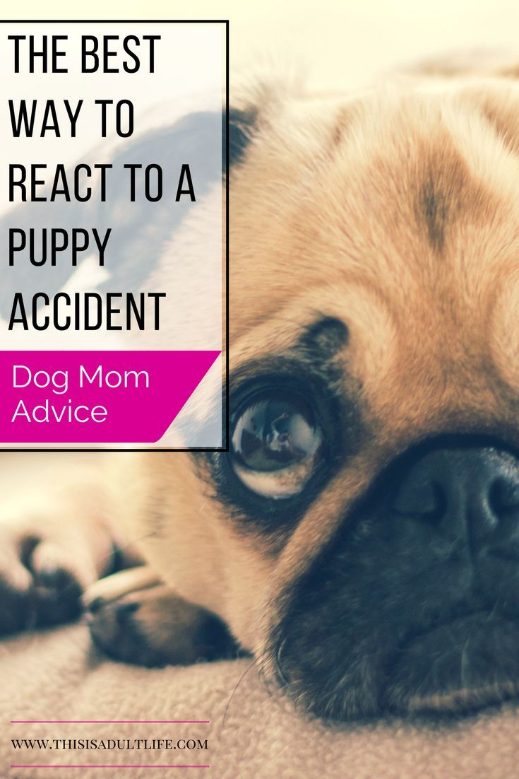 The Best Way to React to a Puppy Accident Dog training