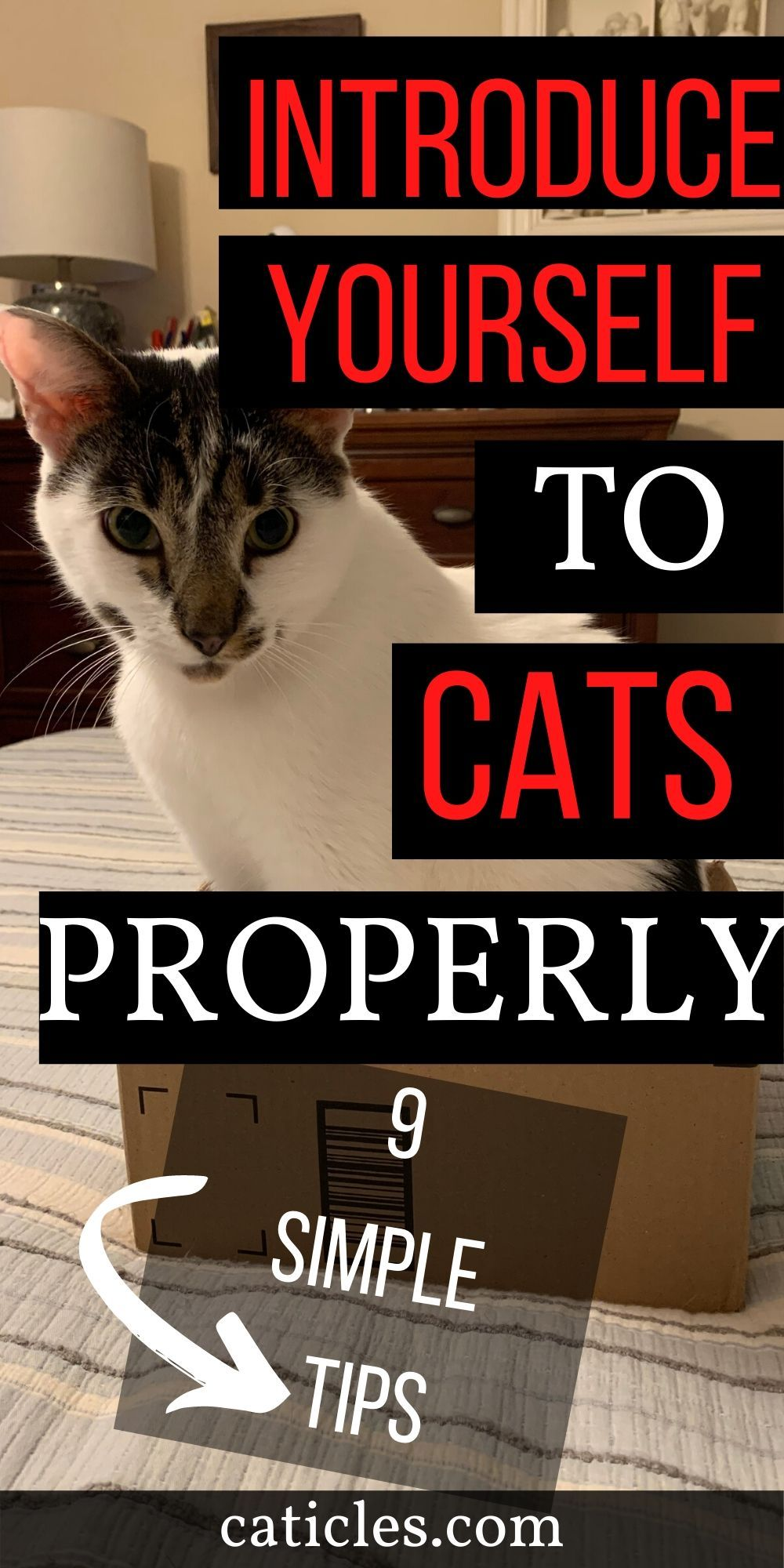 9 tips to introduce yourself to a cat the right way in