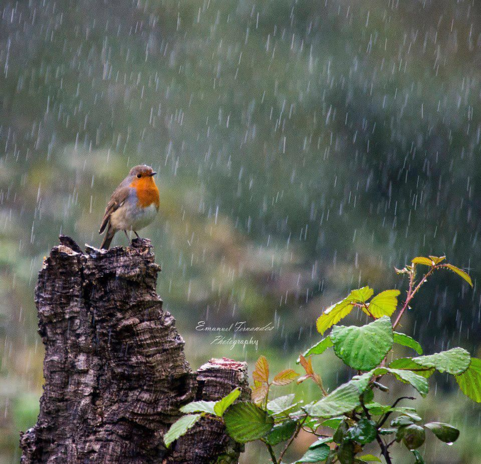 Rain drops keep falling on my head | Rain | Pinterest