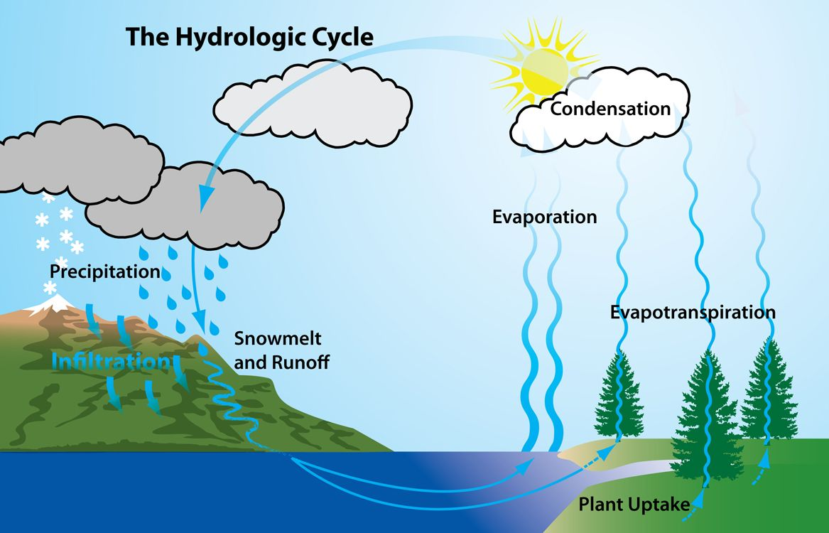 The Water Cycle Diagram 5th Grade 1167x