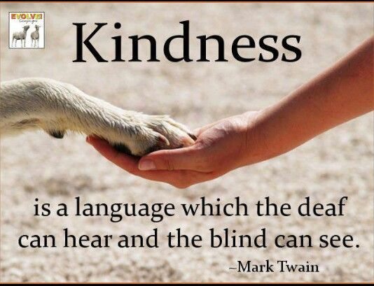 Kindness Animals Quotes Pinterest Kindness To Animals