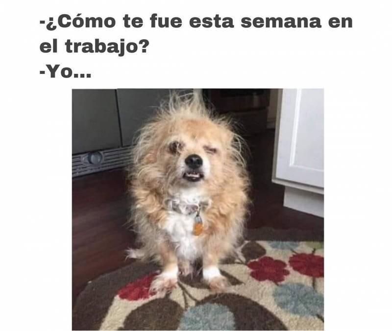 Memesespanol Chistes Humor Memes Risas Videos Argentina Memesespana Colombia Rock Memes Love Viral Bogota Mexico Humornegro Memes Humor Funny