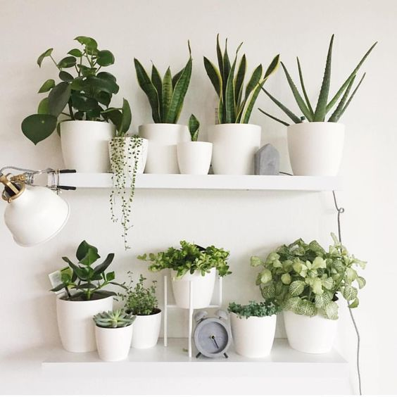 Succulent is definitely the choice of lazy people to raise flowers page plants diy wall decor home also rh pinterest
