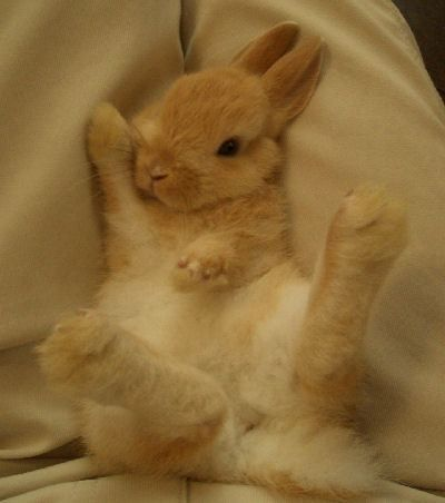 sleeping bunnies are taking over the internet in japan animals