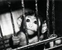 Restore the Animal Welfare Act~ House bill (HR 6693) has been introduced  by Congressman Gerald Connolly (D-VA) of the House of Representatives Animal Protection Caucus to restore the original intent of the 1970 Animal Welfare Act which protects all warm blooded animals. In 2002, Senator Jesse Helms (R-NC) gutted the AWA and removed protection for 95% of animals used in research with a Senate amendment to the Farm Bill. House bill (HR 6693) will reverse that and restore the original intent…