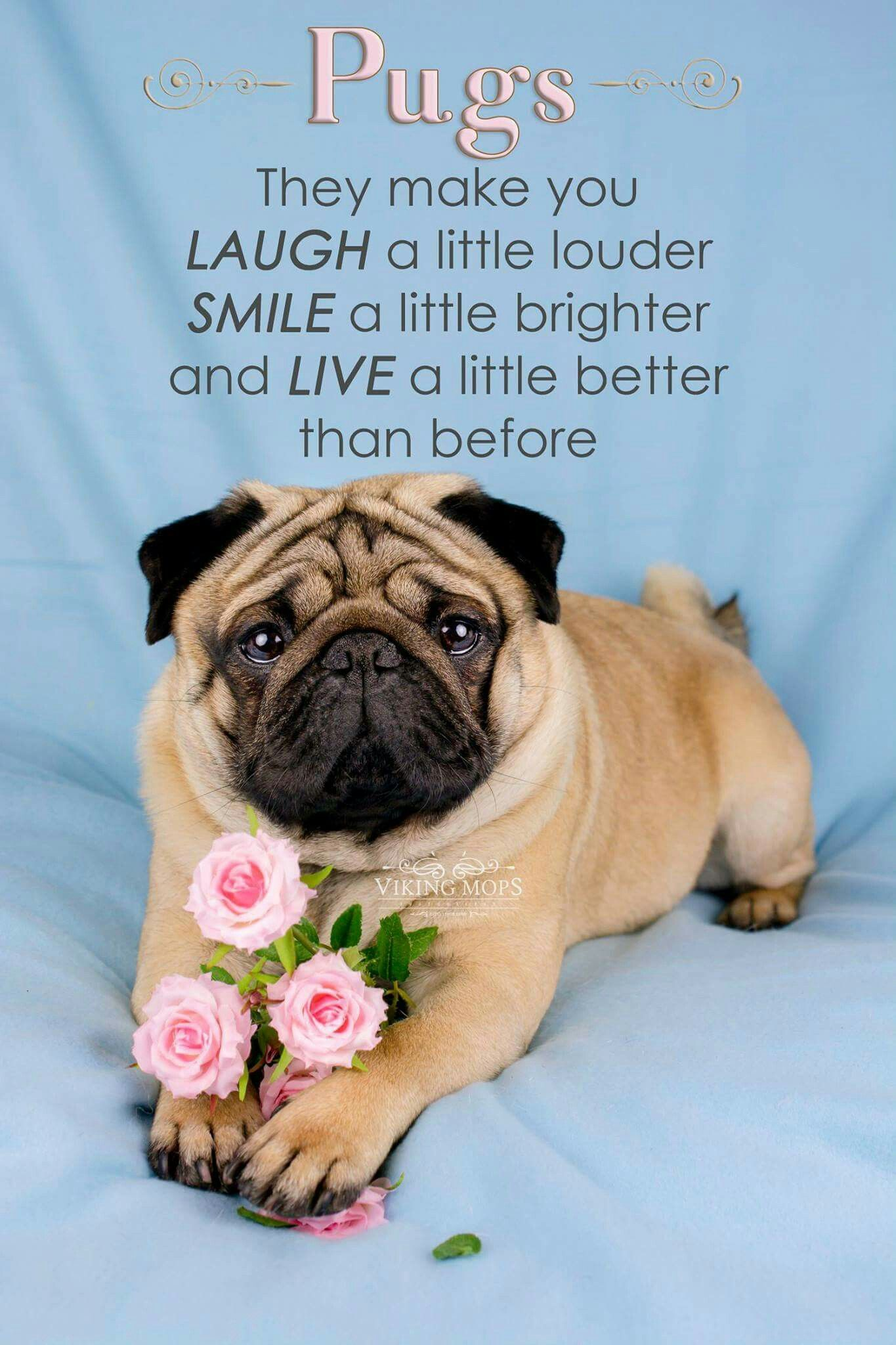 Pugs Make You Happier Pug Quotes Pugs Cute Pugs