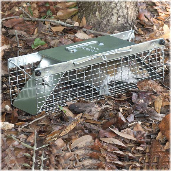 Pin On Havahart Live Animal Traps